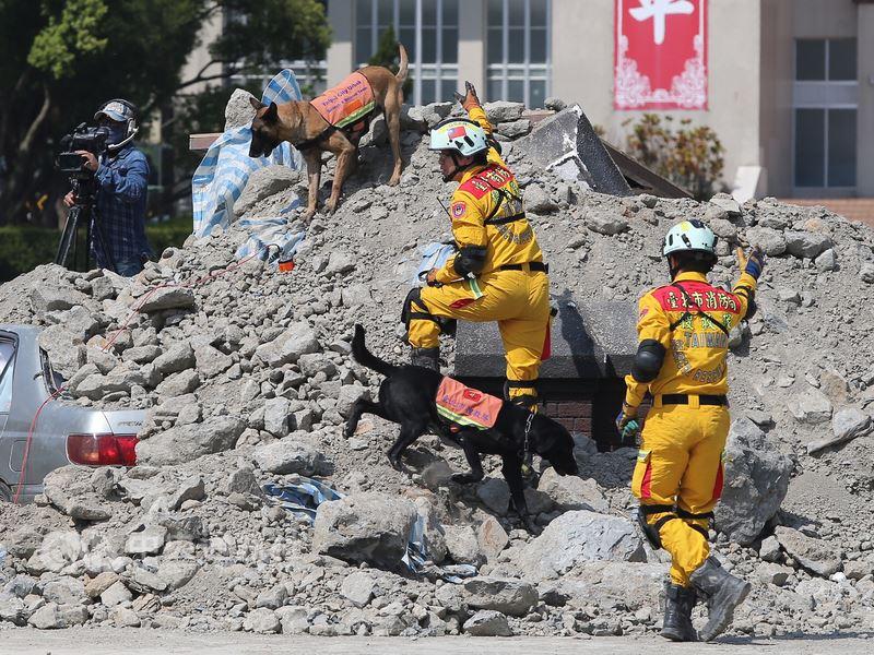 台北市政府31日針對地震及火山災害在國防大學復興崗校區進行模擬演練,也是國內首度將火山爆發情境納入的災害防救演習,搜救隊員帶著搜救犬模擬災區救災。中央社記者徐肇昌攝 107年3月31日