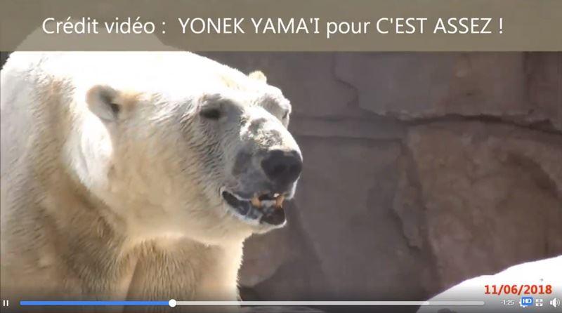 法國經歷新一波熱浪,高溫不僅使人類感到不適,對動物園、遊樂園禁錮的北極熊更是酷刑。(圖取自C'est assez臉書facebook.com/cest.assez.collectif)