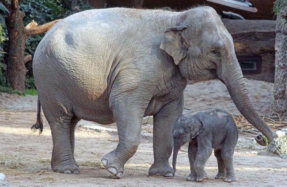 科學家警告,未來50年,地球還可能失去數種哺乳動物,包括黑犀牛和亞洲象都可能在本世紀結束前消失殆盡。(圖取自Pixabay圖庫)