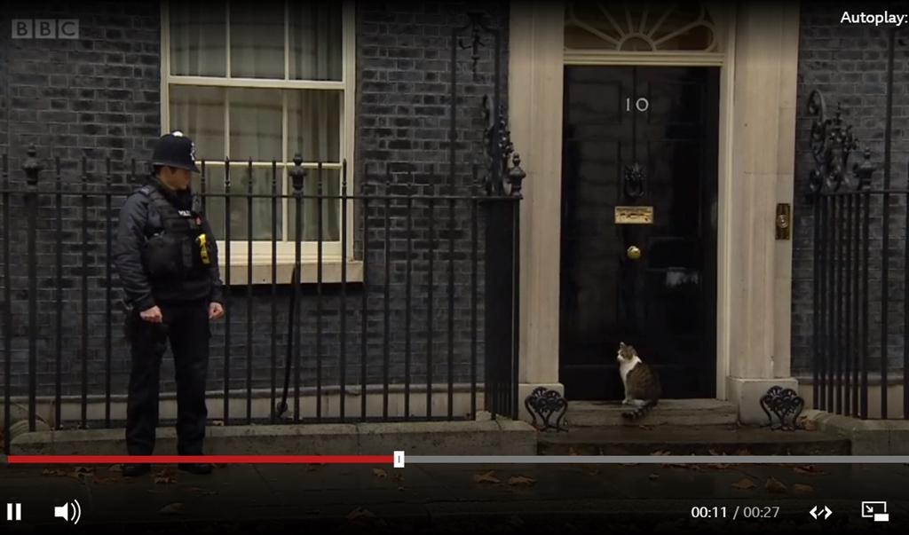 英國廣播公司拍到英國第一貓賴瑞被擋在唐寧街10號門外,轉頭看著站在一旁、全副武裝的員警,似乎在求助。(圖取自BBC網頁bbc.com)
