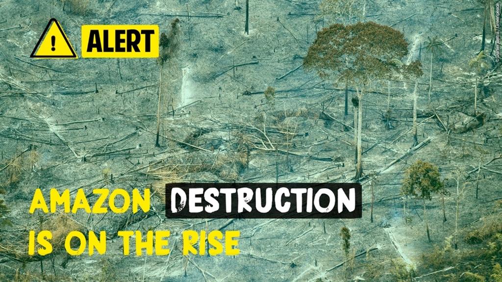 2017年8月至2018年7月間,森林砍伐增加近14%,7900平方公里的森林就此消失。(圖取自twitter.com/greenpeace)