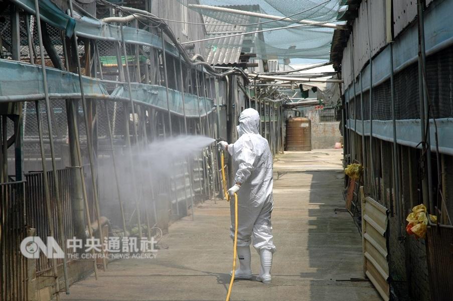 21年前台灣爆發口蹄疫,許多養豬業者至今難以抹滅傷痛。圖為養豬場進行消毒的情形。(中央社檔案照片)