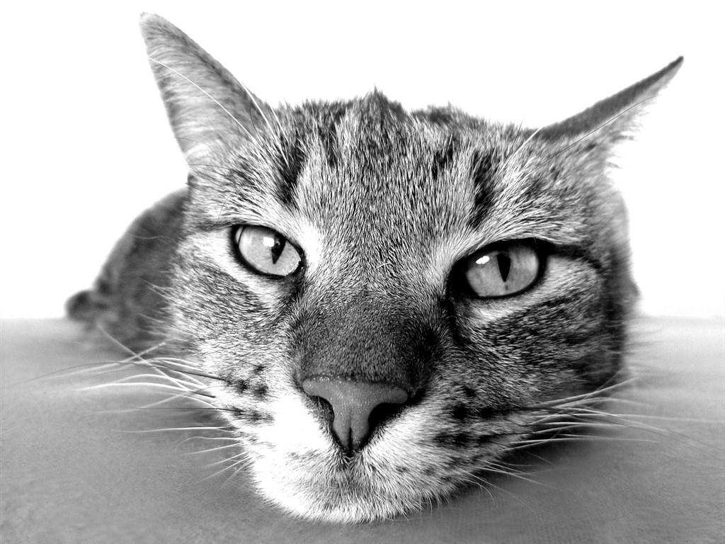 科學家發現,一個人為何會成為「早起的鳥」或「夜貓子」,某種程度上是取決於基因。(圖取自Pixabay圖庫)