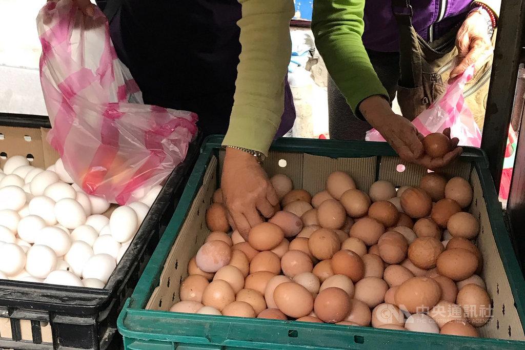 近期雞蛋缺貨,農委會22日重申,缺蛋真正因素是2018年823水災淹死50萬隻雞、禁用芬普尼及氣候因素。中央社記者徐肇昌攝 108年2月22日