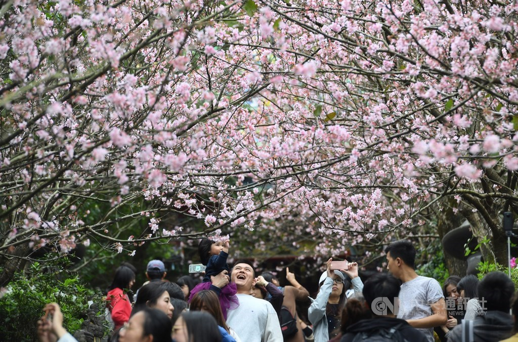 交通部觀光局5日公布4到6月春遊補助方案,自由行旅客住宿每人每日補助新台幣500元。(中央社檔案照片)