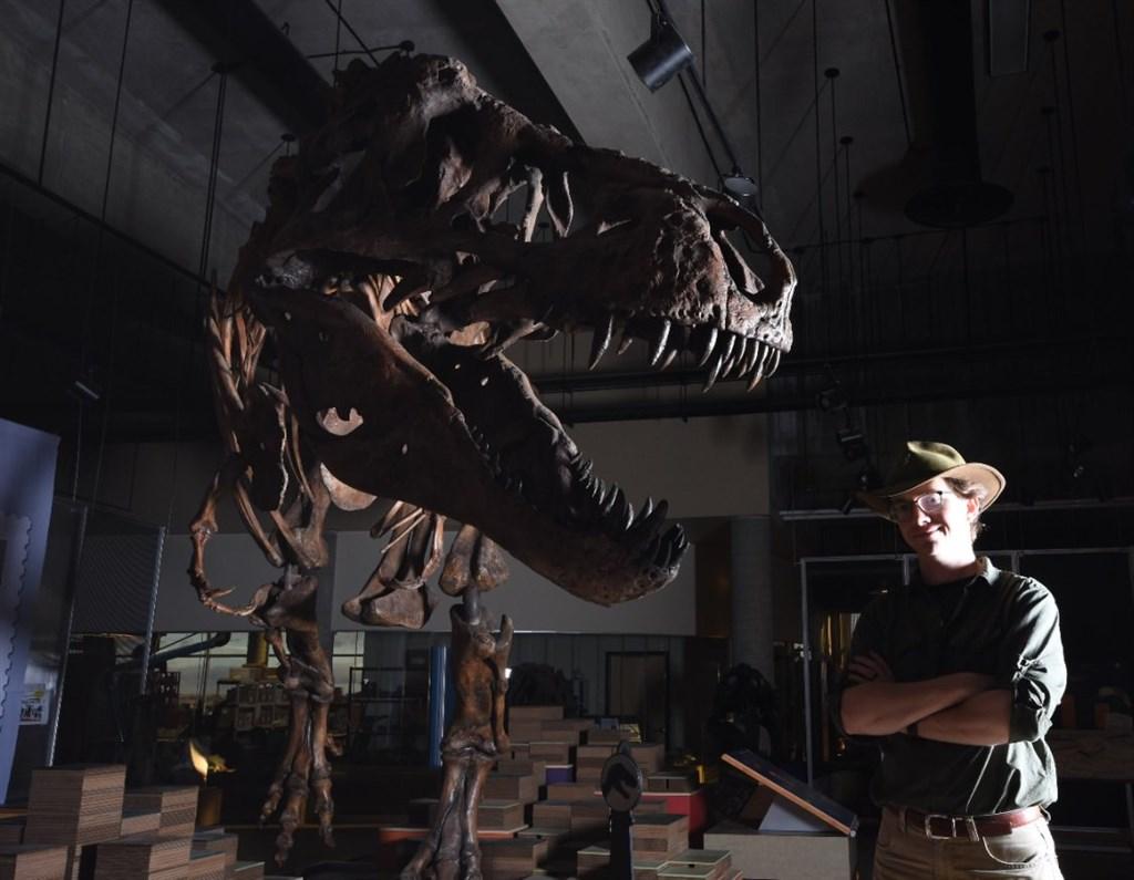 來自加拿大亞伯達大學的古生物學家團隊23日表示,他們1991年發現的暴龍化石是全球迄今發現的最大暴龍。右為研究的主要作者博士後研究員柏森斯。(圖取自twitter.com/WScottPersons)