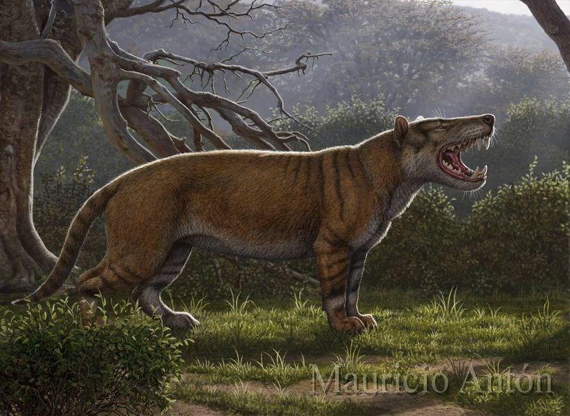古生物學家17日表示,挖出名為Simbakubwa kutokaafrika(班圖語,非洲巨獅之意)的新物種下顎、牙齒與部分骨骼,可能是史上最大肉食哺乳類動物之一。(圖取自facebook.com/mauricio.anton.3)