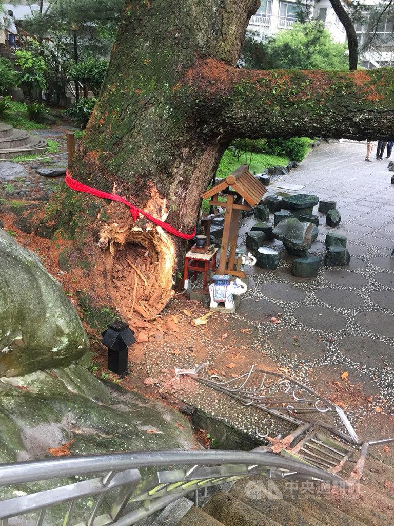 台中市谷關地區一棵五葉松神木21日被發現因受風吹樹幹斷裂,斷木掉落大甲溪谷,斷裂處疑似蟲蛀跡象,台中市農業局將邀集中興大學樹木專家到場診斷。(翻攝畫面)中央社記者趙麗妍傳真 108年4月21日