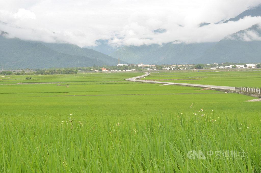 台東區農業改良場助理研究員林駿奇表示,根據中央氣象局資料,台灣已進入梅雨季節,預計10日後天氣逐漸回穩,而高溫高濕的天氣型態最容易發生農作物病害,呼籲農友務必加強防治。(檔案照片)中央社記者盧太城台東攝 108年5月10日