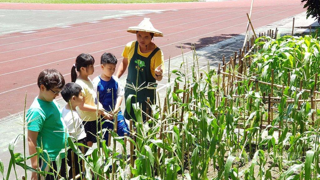 致力推動食農教育的「象農夫」團隊前往國小校園,帶學童到玉米田巡視,並介紹秋行軍蟲的特性、危害和辨識方法。(李孟發提供)中央社記者許秩維傳真 108年6月16日