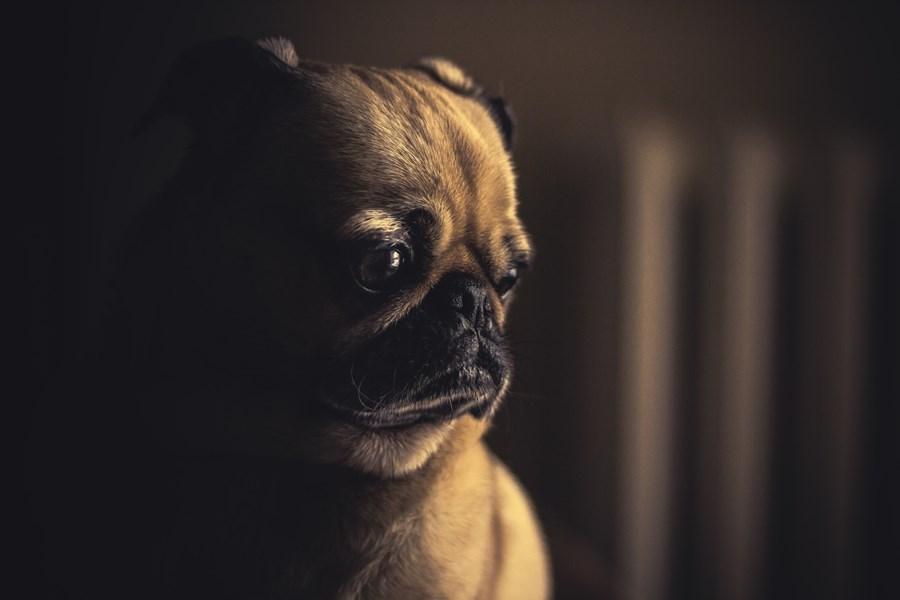 法國遺棄寵物數量居歐洲國家之冠,動物保護組織「3000萬好友基金會」為此推出宣傳影片開嘲諷。(示意圖/圖取自Unsplash圖庫)