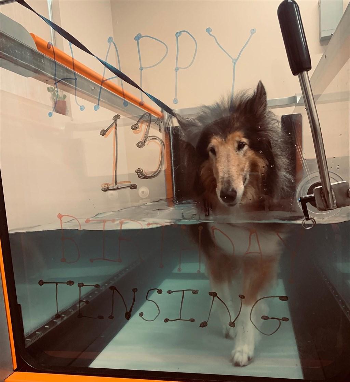 除了傳統的獸醫治療,美國一間寵物醫院還提供多種服務,如水療。(圖取自Friendship Rehabilitation and Pain Management臉書網頁facebook.com)