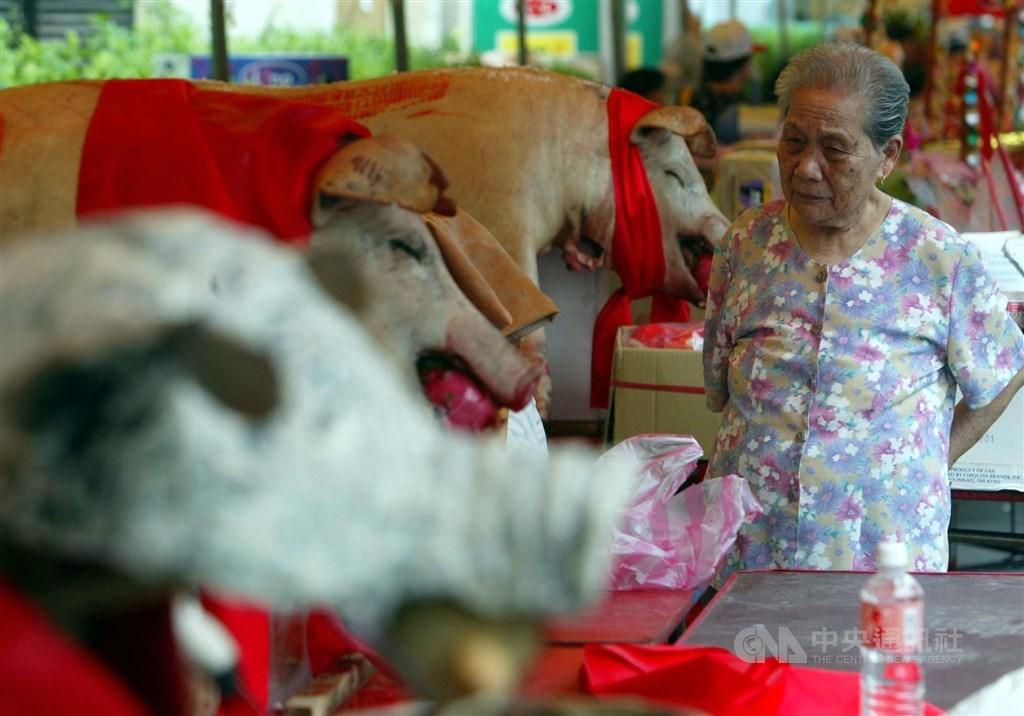 神豬重量比賽是每年義民祭的活動之一,動保團體認為這是虐待動物的陋習,客委會19日表示,尊重所有宗教文化活動的自由,「反虐養不反神豬」。(示意圖/中央社檔案照片)