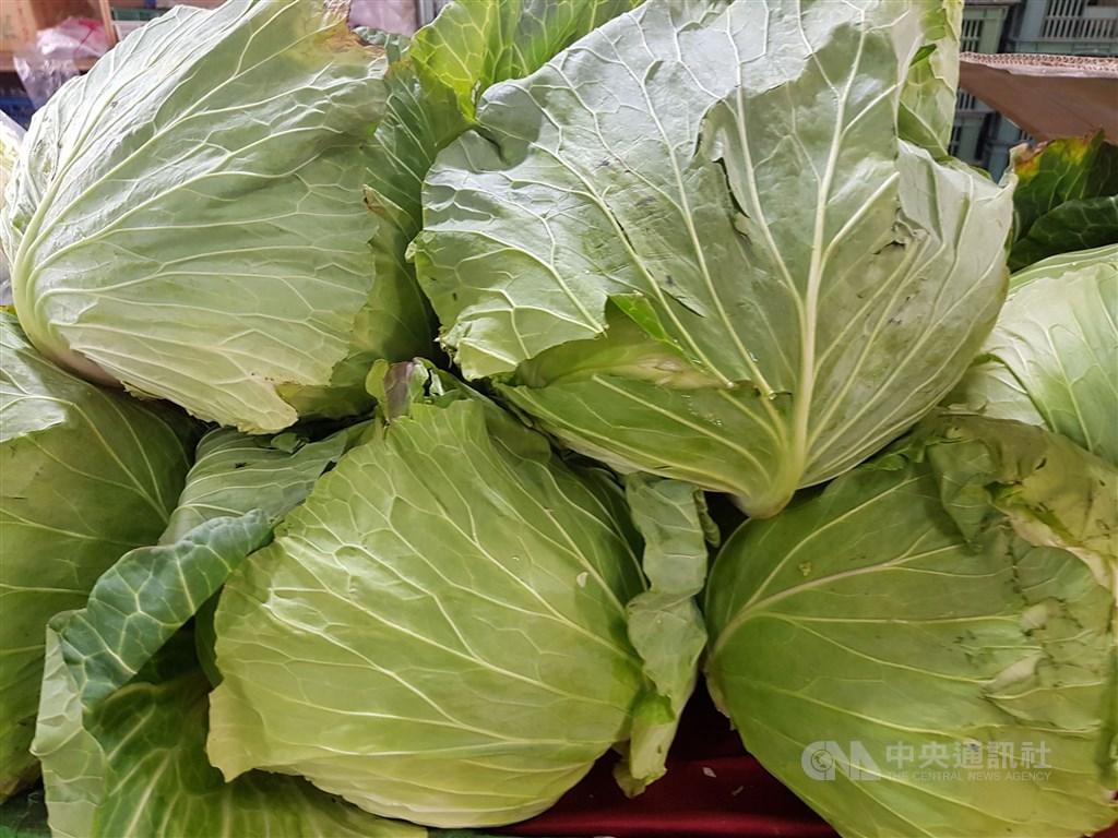 812豪雨後高麗菜價上漲,搶種再起,農糧署公布9月上旬栽種653.7萬株,略較上一旬減少但仍超種。(中央社檔案照片)