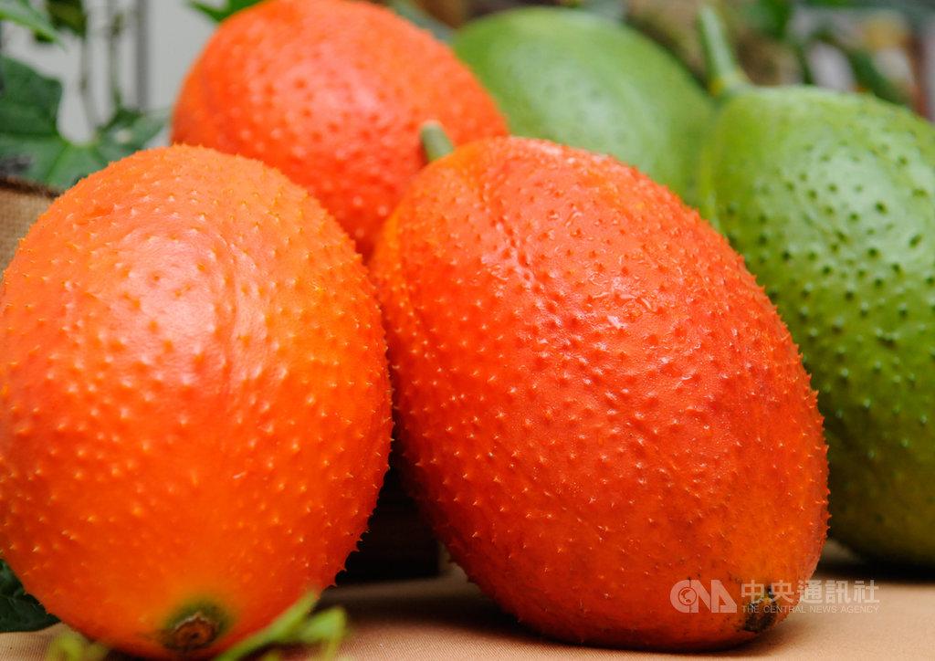 果實外表澄紅亮眼的木虌果,因富含茄紅素等機能性成分,成為台東地區近年來新興的特色作物,目前栽種的面積約10公頃。(台東農改場提供)中央社記者盧太城台東傳真  108年9月17日