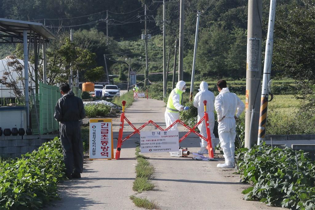 南韓政府17日宣布京畿道坡州市的一處養豬場發生非洲豬瘟疫情,這是南韓首例非洲豬瘟病例。(韓聯社提供)