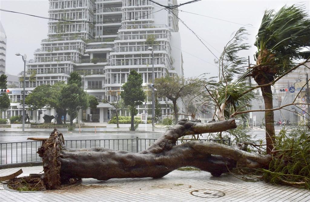 颱風塔巴21日侵襲日本沖繩,造成至少18人受傷,1萬5000多戶停電,數百個航班取消。圖為那霸市路樹倒塌。(共同社提供)