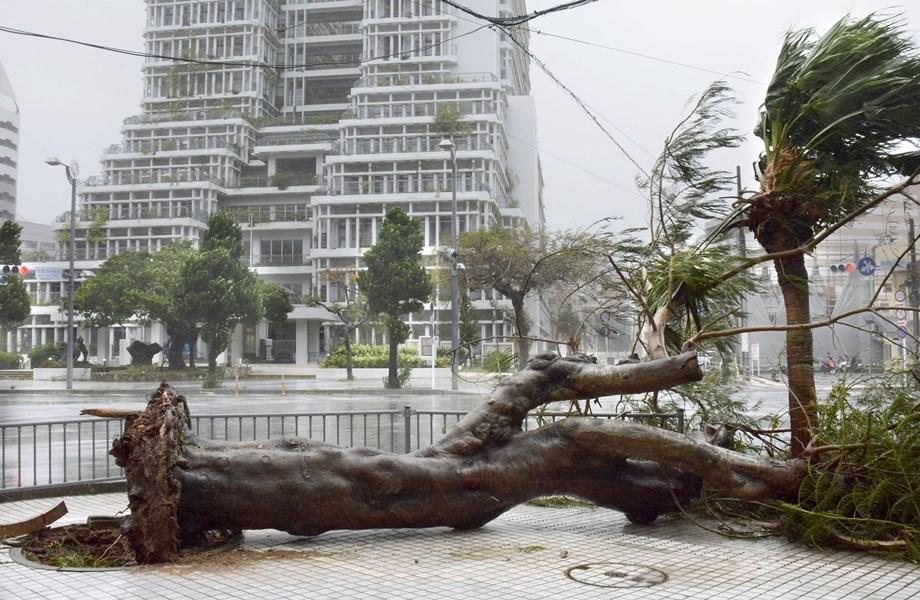 日本沖繩縣21日受到今年第17號颱風塔巴侵襲,強風造成部分地區行道樹被吹斷傾倒。(共同社提供)