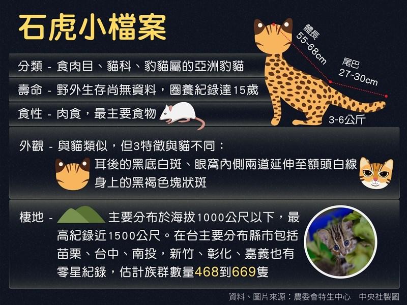 石虎外型與貓類似,但有3項特徵與貓不同。(中央社製圖)