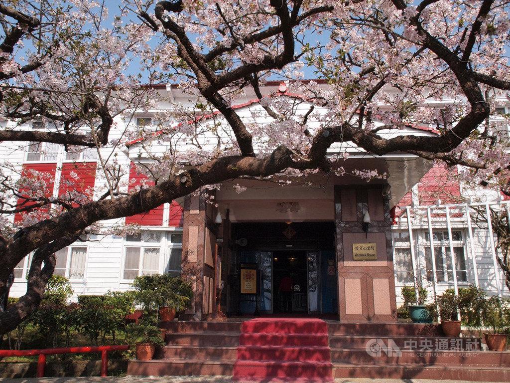生長在阿里山賓館門口的百年染井吉野櫻,有「櫻后」之稱,因為染病,近年花況不佳。(阿里山賓館提供)中央社記者蔡智明傳真  108年10月9日