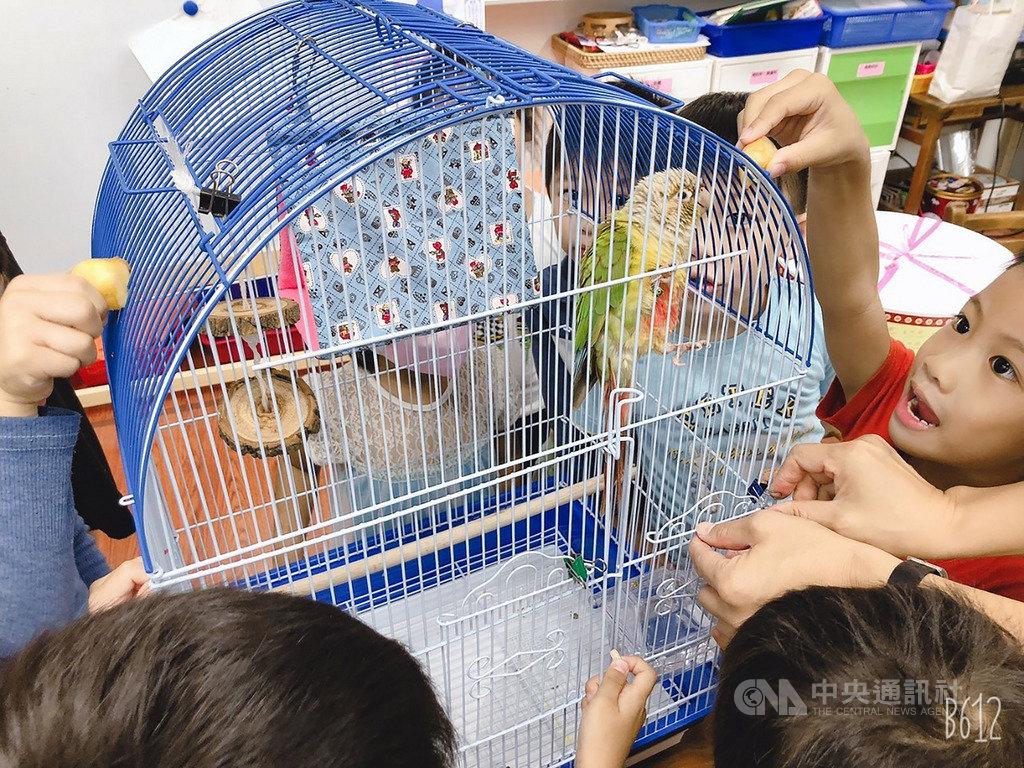 一隻小鸚鵡偶然間飛進新北市五股區德音國小校園,被師生認養後有了新名字,小朋友們常會趁著下課休息時間來探視「綠綠」,想與「綠綠」進行互動。(新北市動保處提供)中央社記者王鴻國傳真 108年10月21日