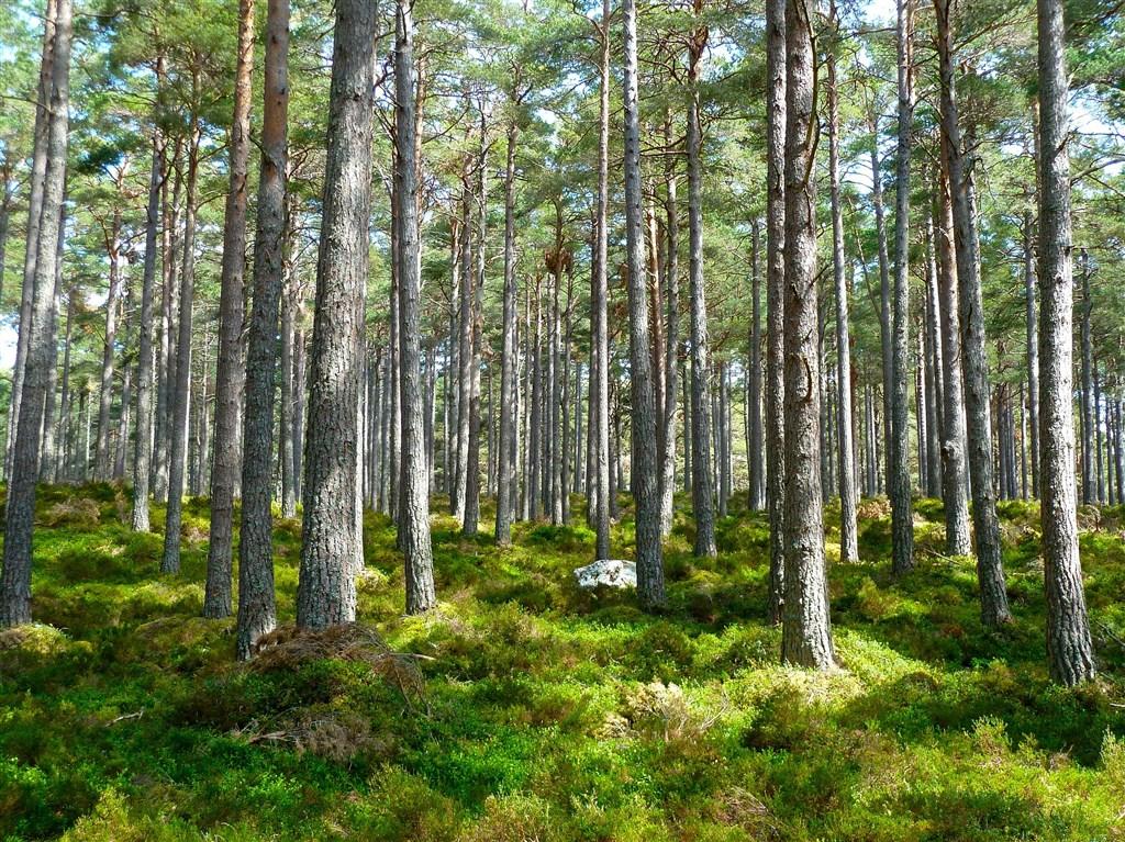 科學家警告說,全球大規模植樹遏止氣候變遷風險的可能成效被高估,並呼籲要更努力透過其他方式削減溫室氣體排放。(示意圖/圖取自Pixabay圖庫)