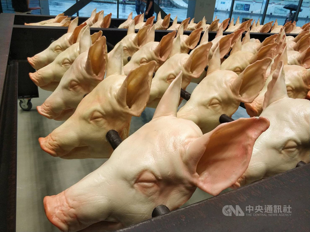 非洲豬瘟疫情2018年在中國爆發並迅速傳播,「豬」成為熱門話題。此為上海當代藝術博物館9月展出館藏作品「恐懼數學」,創作者為已故藝術家大同大張(本名張盛泉)。中央社記者張淑伶上海攝 108年10月24日