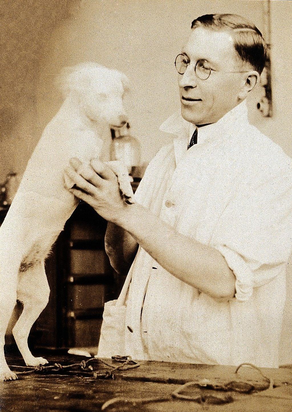 糖尿病患救命武器「胰島素」的開發幕後功臣,是人類最好的朋友「狗」。圖為成功製造胰島素的弗雷德里克.班廷與實驗狗。(圖取自維基共享資源;作者Wellcome Collection,CC BY-SA 4.0)