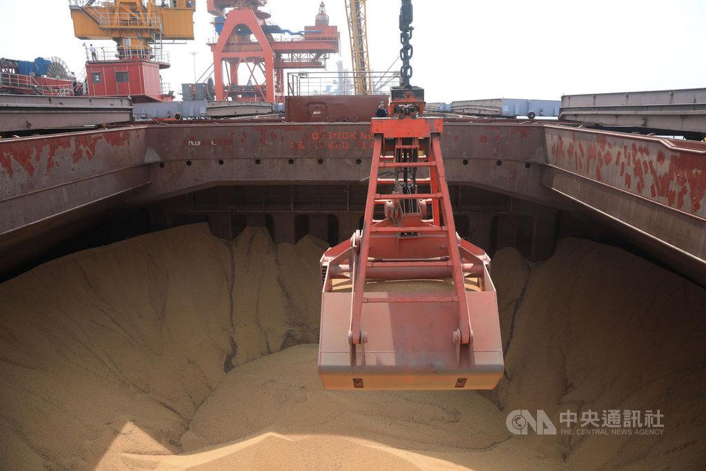 根據中國國家統計局6日發布,中國2019年大幅增加大豆種植面積,比2018年增加1382萬畝,成長10.9%。圖為6月一艘滿載巴西大豆的貨輪,在遼寧盤錦港進行卸貨。(中新社資料照)中央社  108年12月6日