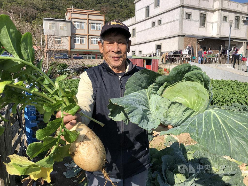 經過3個多月生長,北竿坂里農地的蔬菜3寶高麗菜及白蘿蔔近日開始採收,再過一陣子大白菜也可採收。農民說蔬菜三寶是越冷品質越好,甜脆的口感絕對要比外地進口的好。(連江縣政府提供)中央社 108年12月12日