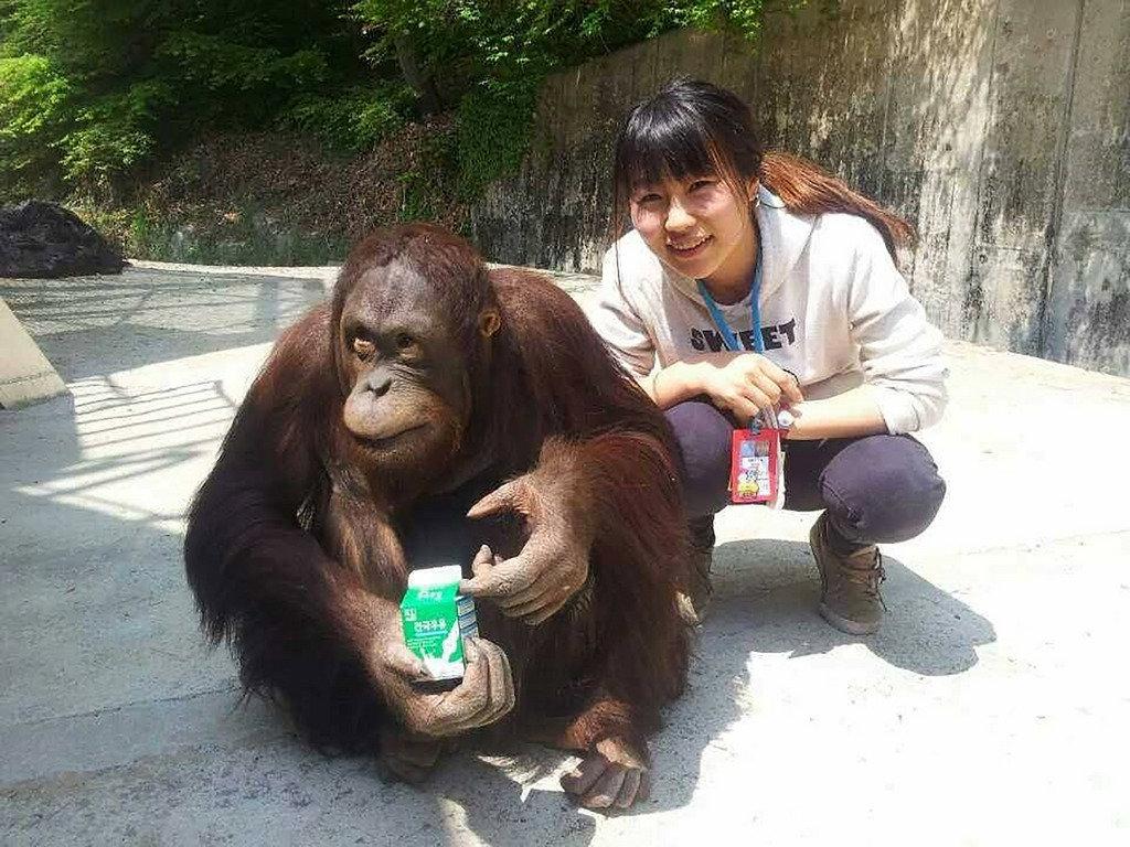 來自日本的岡元友實子(Yumi)從小喜歡動物,立志到國外動物園工作,也為新竹動物園改造盡心力。圖為Yumi在韓國當地動物園實習情景。(Yumi提供)中央社記者魯鋼駿傳真 108年12月27日