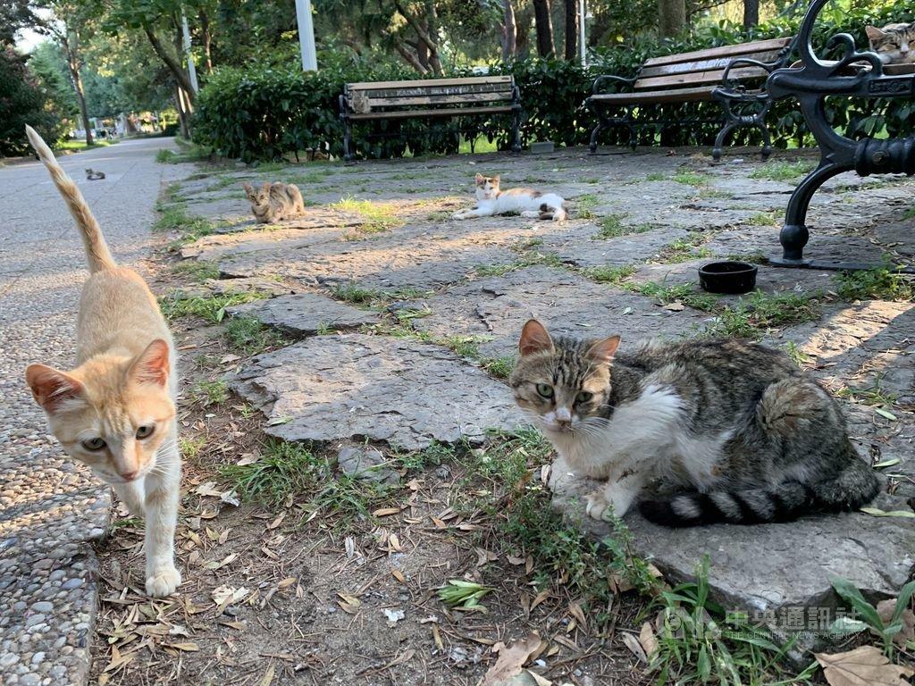 土耳其人愛貓出名,全境估有300萬隻家貓、1000萬隻街貓。有人甚至說伊斯坦堡是「被貓統治的城巿」,圖為當地一處公園,圖為109年8月1日攝。中央社記者何宏儒伊斯坦堡攝 109年1月5日