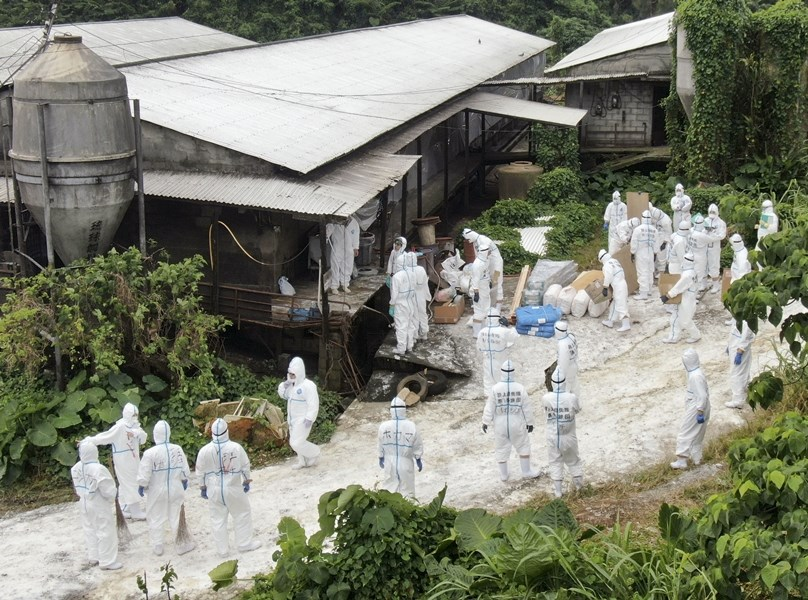 日本豬瘟疫情陸續蔓延,沖繩宇流麻市一處農場(圖)飼養的豬8日確定被驗出豬瘟病毒,這是繼1986年10月以來,沖繩時隔33年再度發生豬瘟疫情。(檔案照片/共同社提供)
