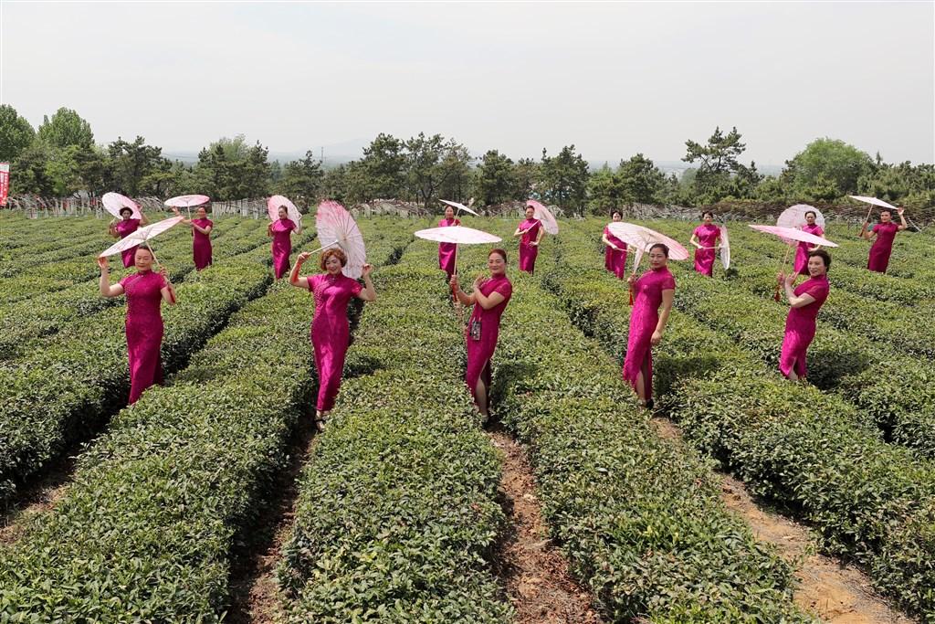 江蘇省扶貧辦7日宣布,全省脫貧率已達99.99%以上。圖為連雲港市一處「扶貧茶園」,宣稱帶動當地貧困居民增加收入。(檔案照片/中新社提供)