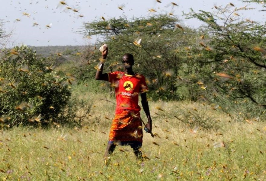 東非地區蝗災嚴重,聯合國官員本週表示,有1300萬人面臨糧食嚴重不保的情況,專家13日投書媒體,呼籲國際社會盡速行動,防爆發人道危機。(檔案照片/路透社提供)