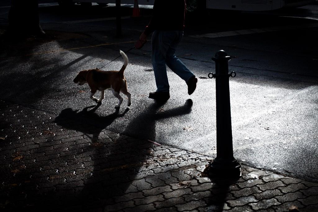 中國專家表示,如果寵物在外接觸到武漢肺炎疫情和病人,對寵物也需要進行隔離監控。(示意圖/圖取自Unsplash圖庫)