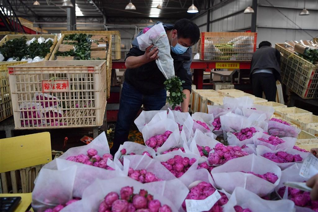 14日情人節受到武漢肺炎疫情衝擊,中國花卉價格崩盤,僅剩去年的1/3。圖為10日斗南花卉電子交易中心的工作人員在整理花束。(中新社提供)