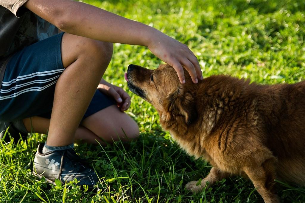 總部位於巴黎的世界動物衛生組織28日表示,目前沒有證據家畜與寵物會成為人類的病毒感染源。(示意圖/圖取自Pixabay圖庫)