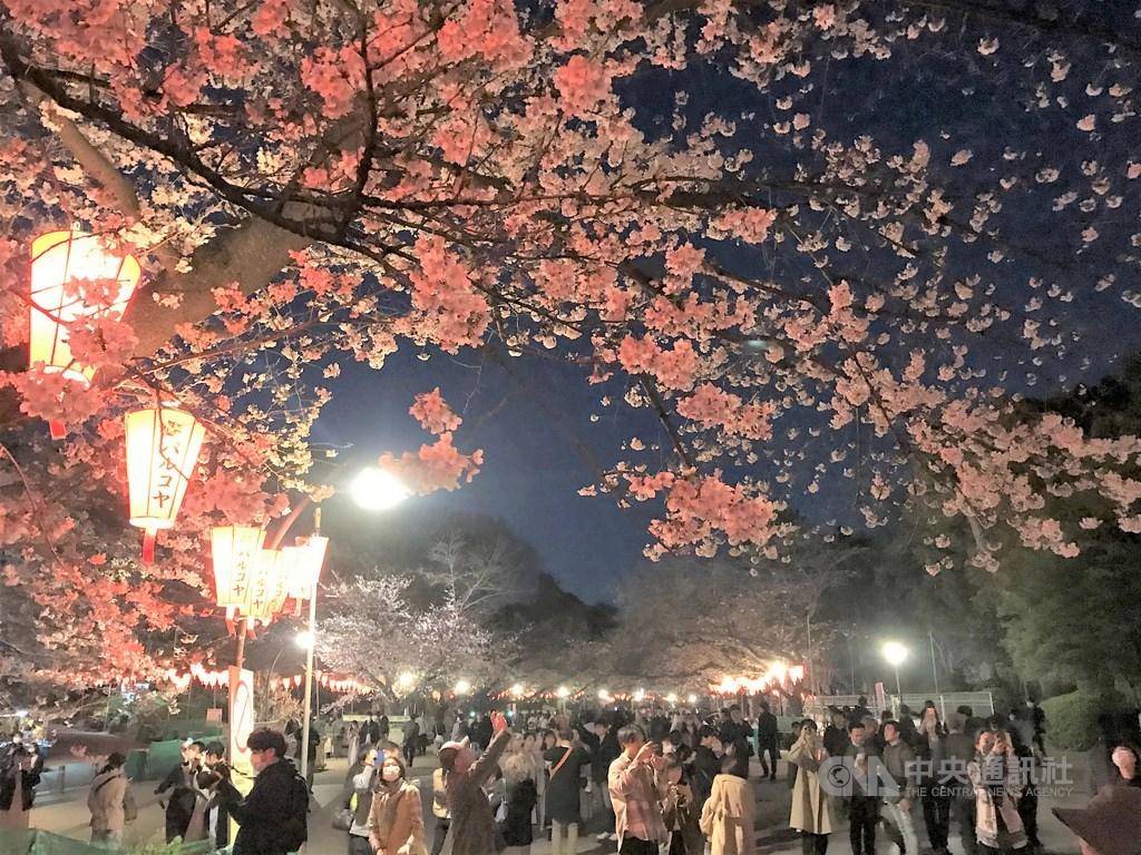 東京上野恩賜公園有上千株櫻花,是日本知名的賞櫻景點,21日受到武漢肺炎疫情影響,賞櫻氣氛不如往年熱絡,但遊客仍可賞夜櫻,別有一番風情。中央社記者楊明珠東京攝 109年3月22日