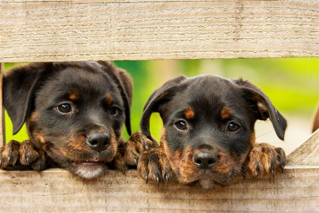 華盛頓郵報報導,過去一段時間寵物認養倍增,馬里蘭州蓋瑟斯堡動物救援所過去週日平均約15隻貓狗能找到認養家庭。(圖取自Pixabay圖庫)