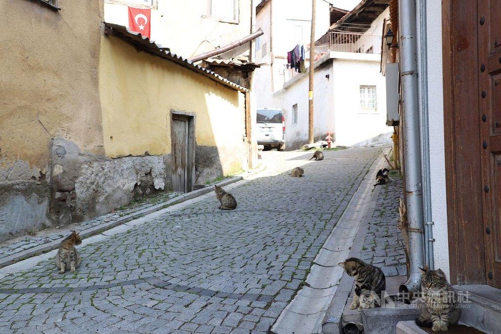 土耳其武漢肺炎確診病例數於25日跳增至近2500例,觀光景氣蒙受嚴重衝擊。首都地標之一的安卡拉堡一條小巷25日下午門可羅雀,只見小貓棲息沒有遊客。中央社記者何宏儒安卡拉攝  109年3月26日