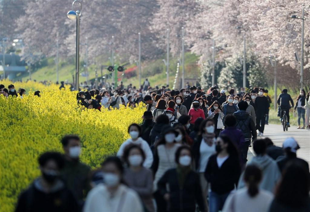 至26日凌晨零時,韓國確診武漢肺炎人數達9241例。圖為釜山民眾戴口罩賞櫻。(韓聯社提供)