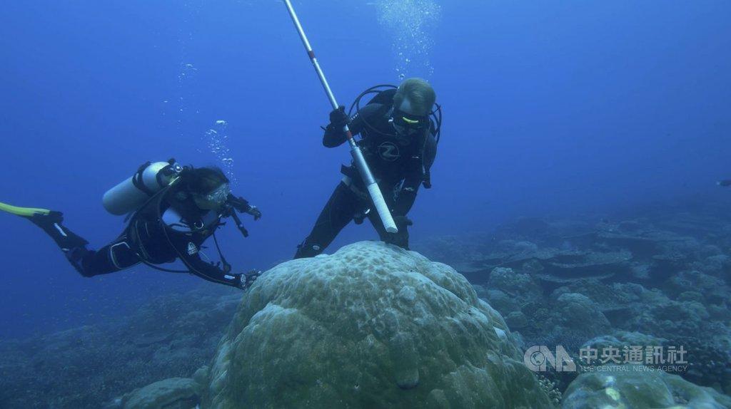 研究人員在蘇門答臘群島潛水鑽取珊瑚岩芯標本。(澳洲國立大學教授妮莉莉・亞伯蘭提供)中央社記者蘇思云傳真 109年3月31日