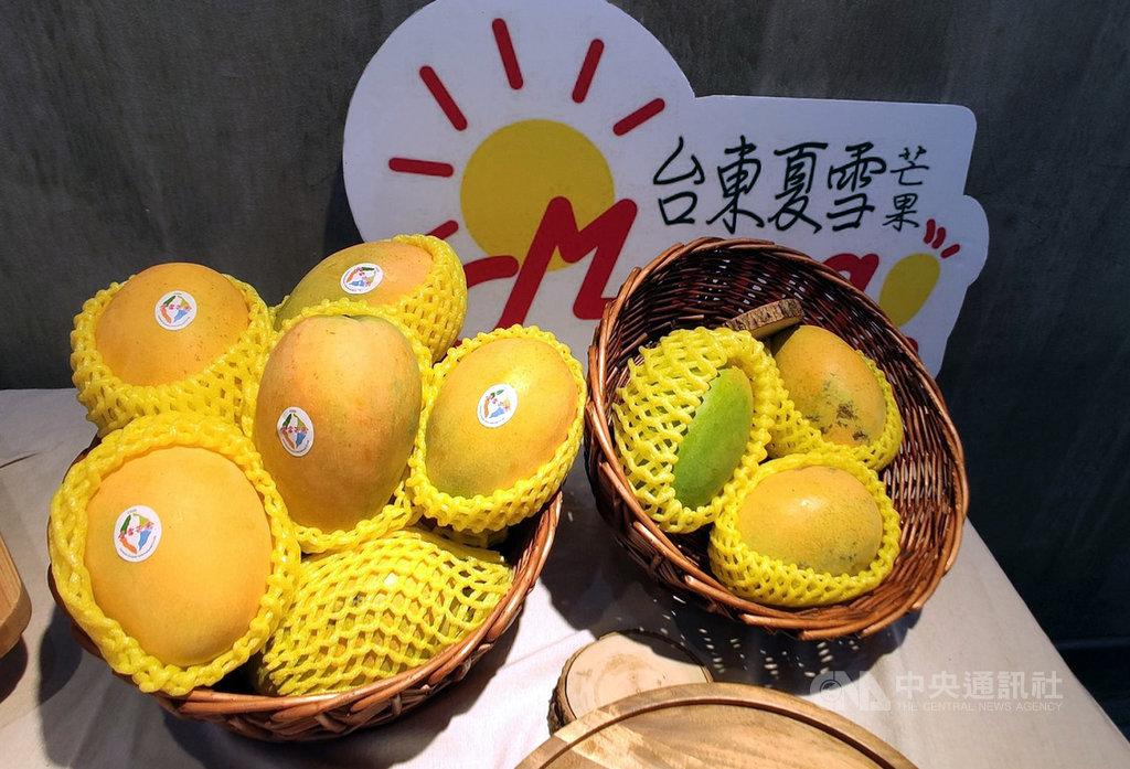 有「芒果界LV」之稱的夏雪芒果,價格是一般芒果的3倍,今年受異常氣候影響產量大減,A果銷往香港供不應求。中央社記者盧太城台東攝 109年6月5日