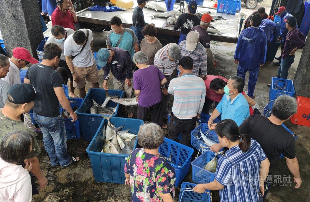 邁入颱風季節,台東縣太麻里鄉「三和定置漁場」收網暫停出海抓魚3個月。圖為三和漁場「現撈」漁獲便宜賣,因而發展另類的搶魚文化,每天吸引不少饕客和搶鮮民眾。中央社記者盧太城台東攝  109年6月10日