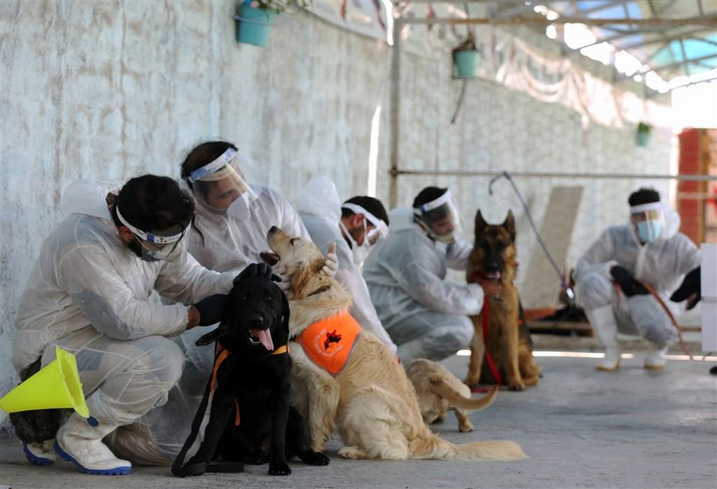 伊朗今天通報新增超過100起武漢肺炎死亡病例,是兩個月來新高紀錄。圖為伊朗當局訓練犬隻檢測人體內的武漢肺炎病毒。(安納杜魯新聞社提供)