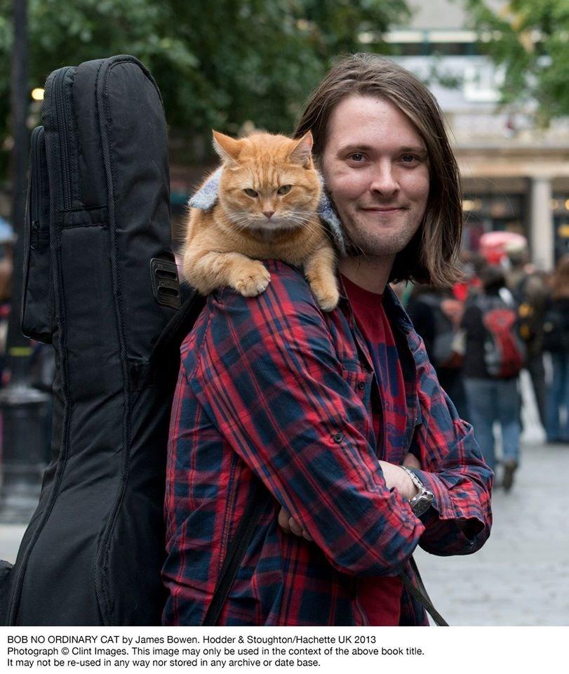 電影「遇見街貓Bob」主角「鮑伯」15日離世,結束了14年的傳奇「貓」生。(圖取自facebook.com/StreetCatBob)
