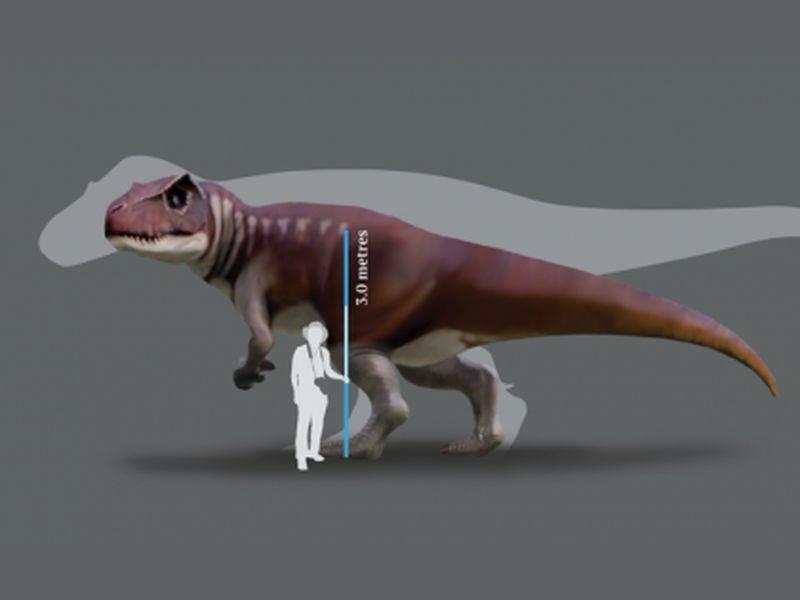 澳洲廣播公司18日報導,澳洲昆士蘭州大約60多年前出土一批恐龍腳印,昆士蘭大學古生物學家羅米里奧、索茲柏瑞和強內爾日前公開研究成果,指出腳印是來自一批侏羅紀時期的大型肉食恐龍。(圖取自昆士蘭大學網頁uq.edu.au)