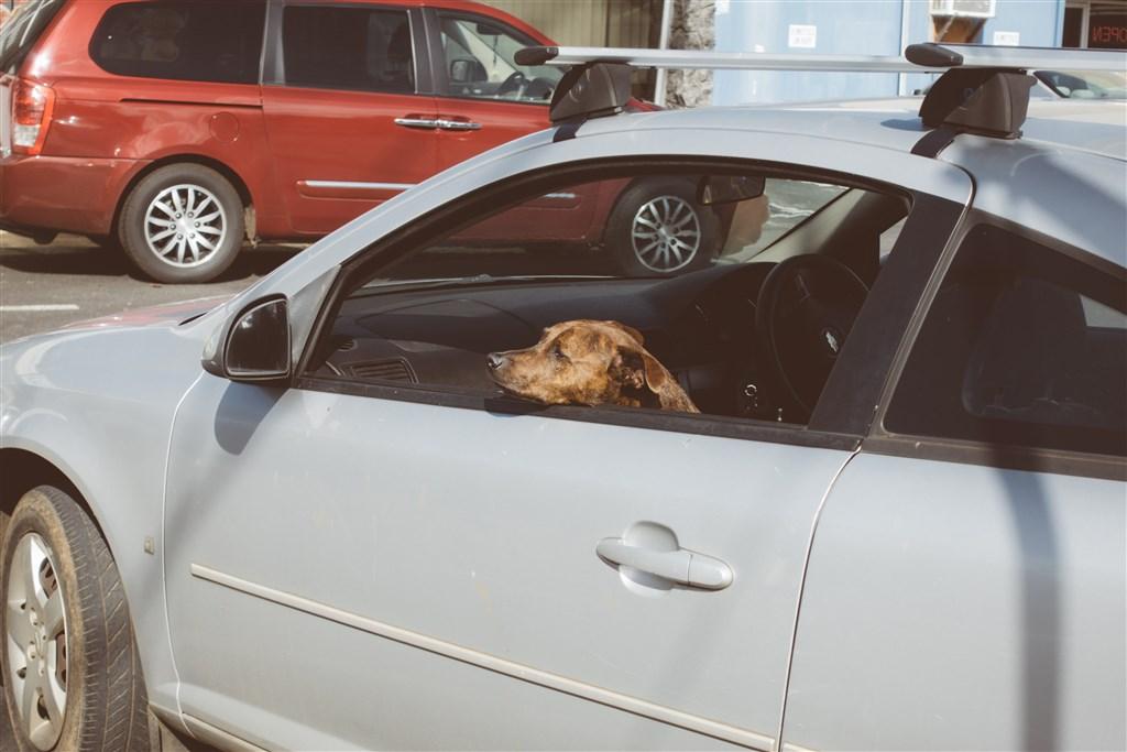 台北市動保處27日表示,訂定發布犬貓飼養基本照護規則後,飼主不可把狗、貓單獨留在汽車內。(示意圖/圖取自PAKUTASO圖庫)