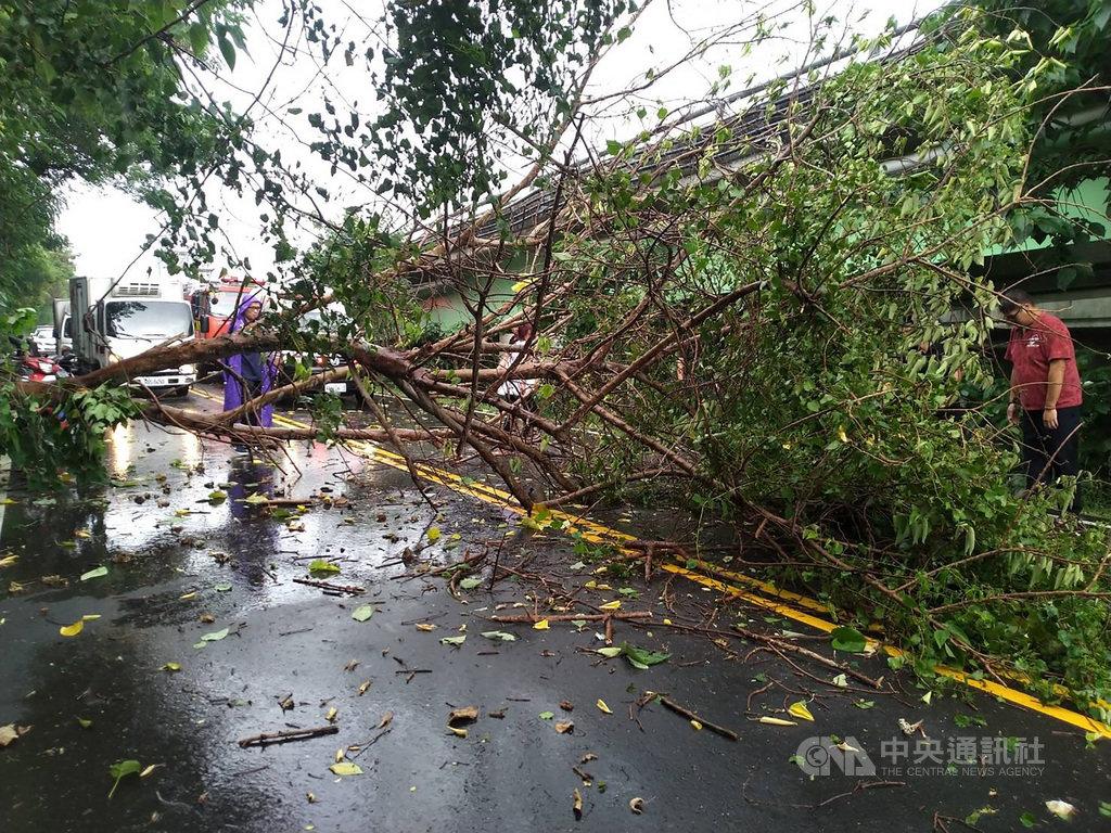 台中地區2日下午大雨滂沱,南屯區筏子東街一段有路樹突然倒塌,一名機車騎士經過疑遭壓傷,消防局獲報到場搶救。(台中市消防局提供)中央社記者蘇木春傳真 109年7月2日